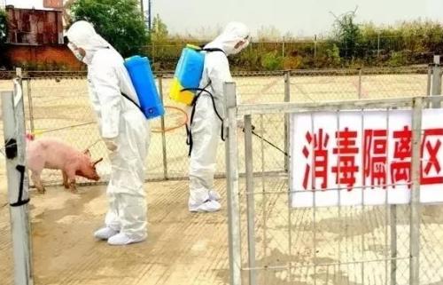 农业农村部答复秦英林:支持社会力量参与非洲猪瘟防控技术攻关
