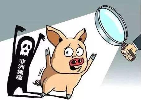 非洲猪瘟并不总是一种高度传染性疾病,防控非瘟关键在于切换传播途径
