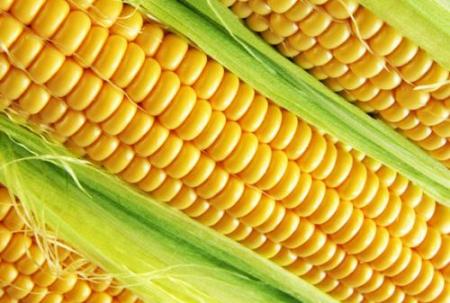 2019年08月26日全国各省玉米价格表及行情走势报价