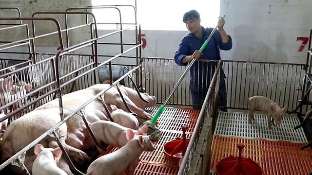 德国愿向越南分享有关非洲猪瘟疫情的经验