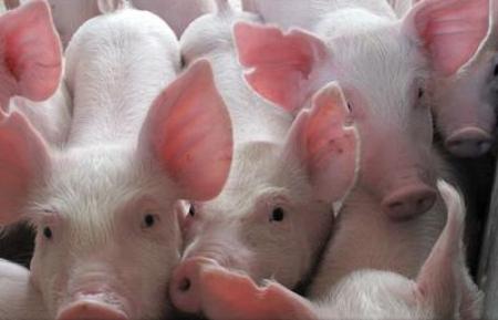 2019年08月27日全国各省生猪价格外三元价格报价