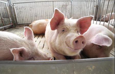 2019年08月28日全国各省生猪价格外三元价格报价