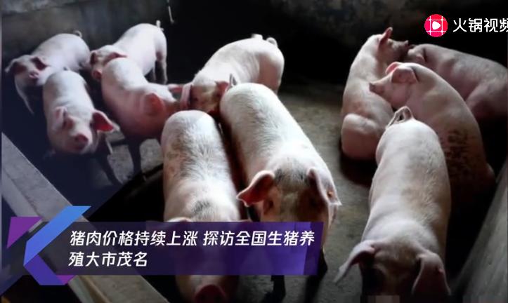 猪肉价格持续上涨 探访全国生猪养殖大市茂名