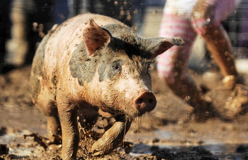 养猪企业陷窘境股价逆势上扬,2019下半年猪价或继续上涨