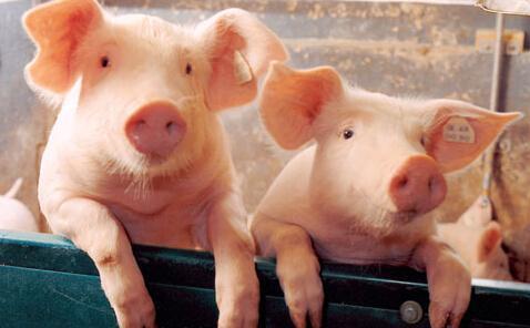 贵州出台生猪市场保供稳价工作应急预案,缓解市场价格大幅波动