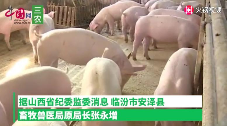 山西安泽县原畜牧局长被通报:170头生猪未经检疫流出县域