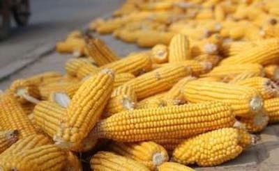 2019年08月30日全国各省玉米价格表及行情走势报价