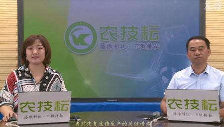 黄瑞华: 当前生猪生产恢复发展的关键措施