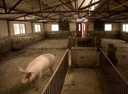 刘洪贵:发生过非洲猪瘟中小养猪场复养案例分享,复养方案不能仅停留在理论