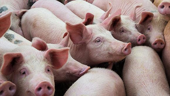 半年亏1.56亿依然受追捧 不断扩生猪产能股价涨180%