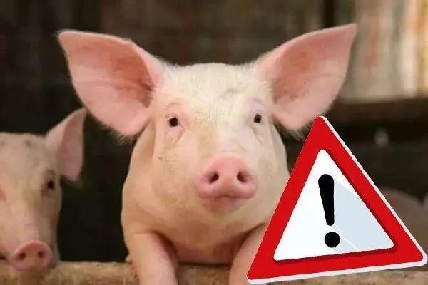 当前非洲猪瘟疫情是否得到有效控制?