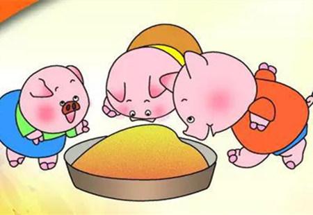 饲喂发酵饲料的猪肉更好吃!因饲料发酵后能增加肉中风味氨基酸含量
