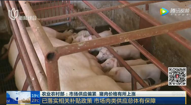 农业农村部:市场供应偏紧 猪肉价格有所上涨