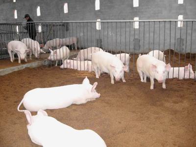 异位发酵床处理猪场粪污技术,当选2018年十项重大引领性农业技术!