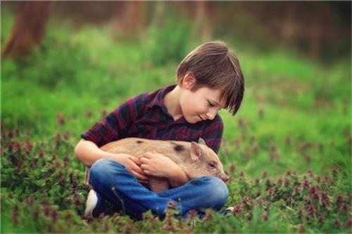 保育猪早期护理中该如何做好饲料营养管理?