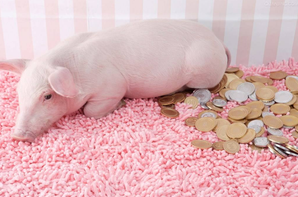 养一头猪能赚多少钱?猪价拉升养殖效益,养殖户头均盈利1500元