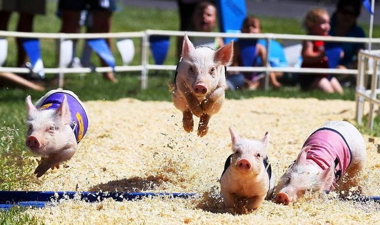 扭亏为盈股价暴涨200%,养猪上市企业齐齐布局