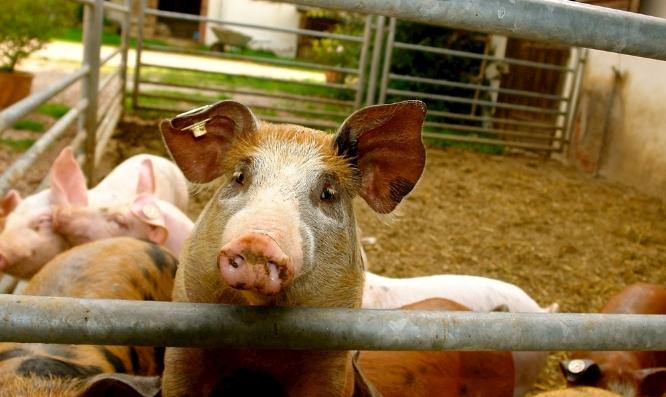 9月5日全国生猪价格外三元报价表,广东省猪价格位居全国榜首