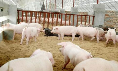 9月7日全国生猪价格外三元报价表,江西猪价串至全国第三,价格回落地区减少
