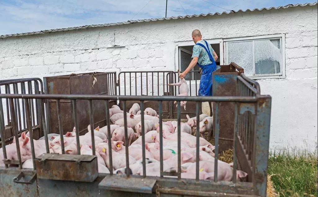 陕西生猪养殖开始进入新一轮生产,供给趋紧现象将逐步缓解!
