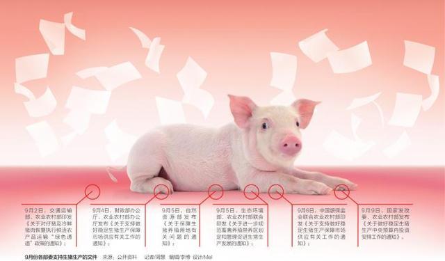 多部门罕见连续发文补贴养猪 养猪户如何重拾信心?