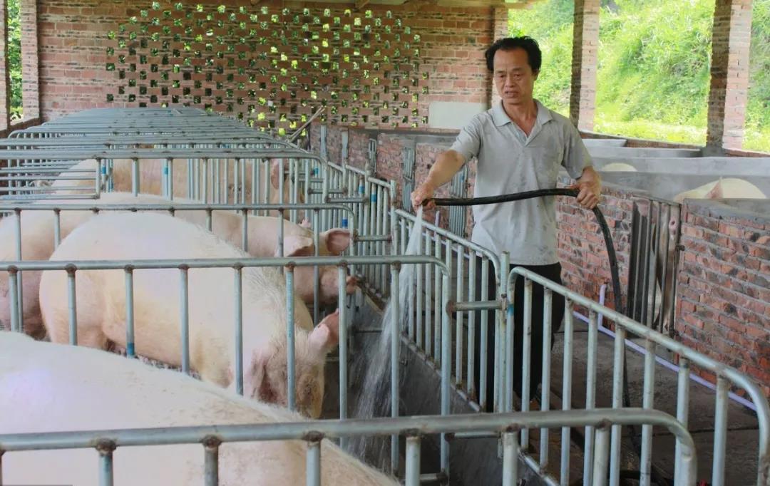 储备冻肉相继投放,保供稳价,猪价高点已过去?