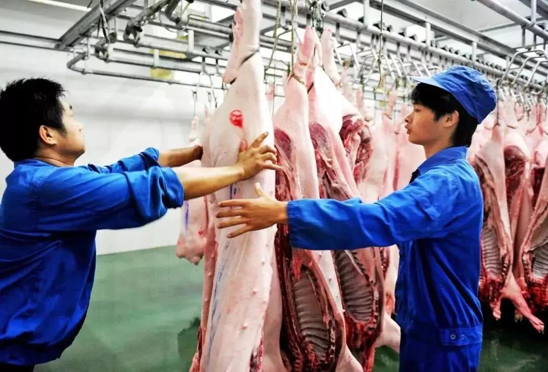 全世界的猪肉出口,都不一定能补上中国的缺口