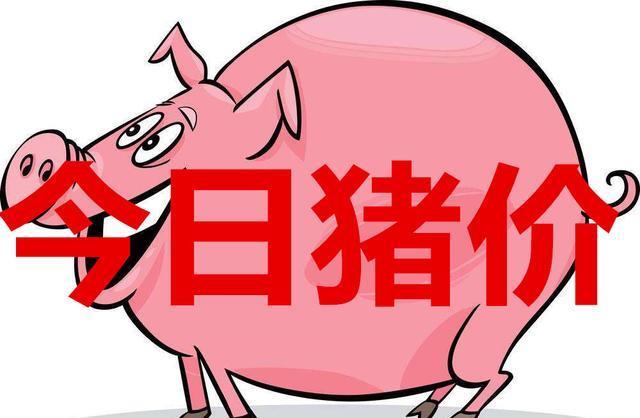 今日猪市评析:双重因素助推猪价上涨,春节前猪肉紧缺状态难解!
