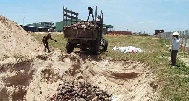 越南紧急扑杀400万头生猪,进军中国彻底无望!