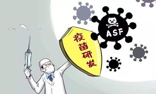 非洲猪瘟疫苗即将进入临床实验,基因功能研究不足,疫苗前途未卜