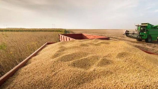 9月11日全国豆粕价格行情表,今日江西豆粕报价下跌100元/吨