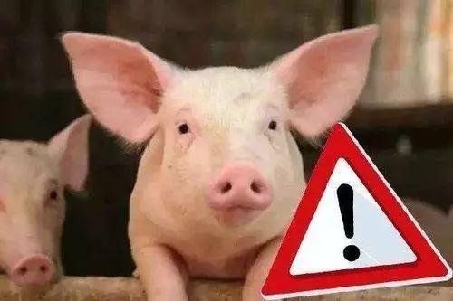 中国养猪业,目前最急需的是什么?