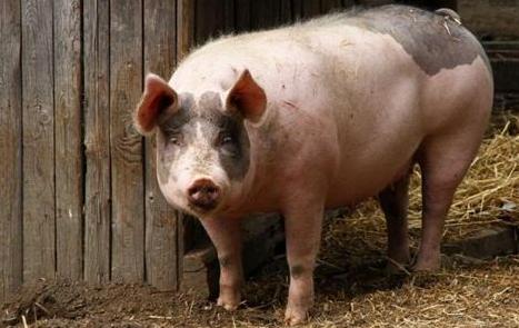 9月12日全国生猪价格土杂猪报价表,除东三省和两湖地区外全线上涨