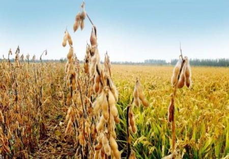 9月14日全国豆粕价格行情表,辽宁豆粕价格涨势明显,东三省豆粕价格上涨空间大增