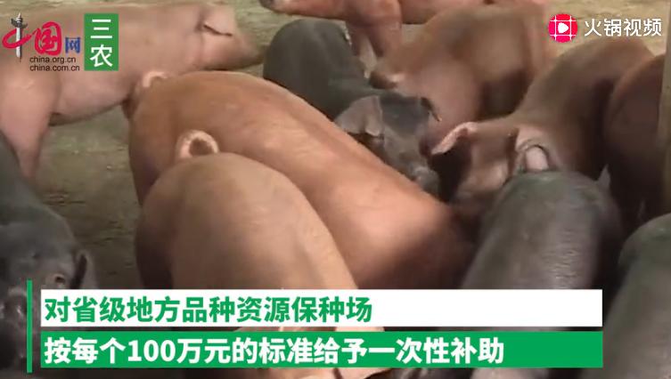 湖北出台硬措施支持生猪生产:种猪场最高可获200万元补助