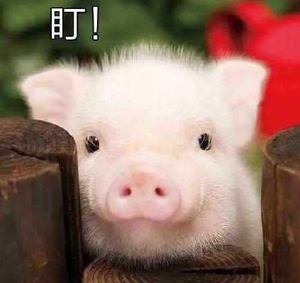 """成都""""猪十条""""来了,成都全年生猪保有量不低于400万头"""