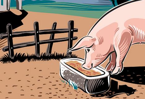 中国养猪业现状分析及未来发展趋势预测