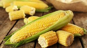9月17日全国玉米价格行情表,北京玉米价格月跌169元/吨