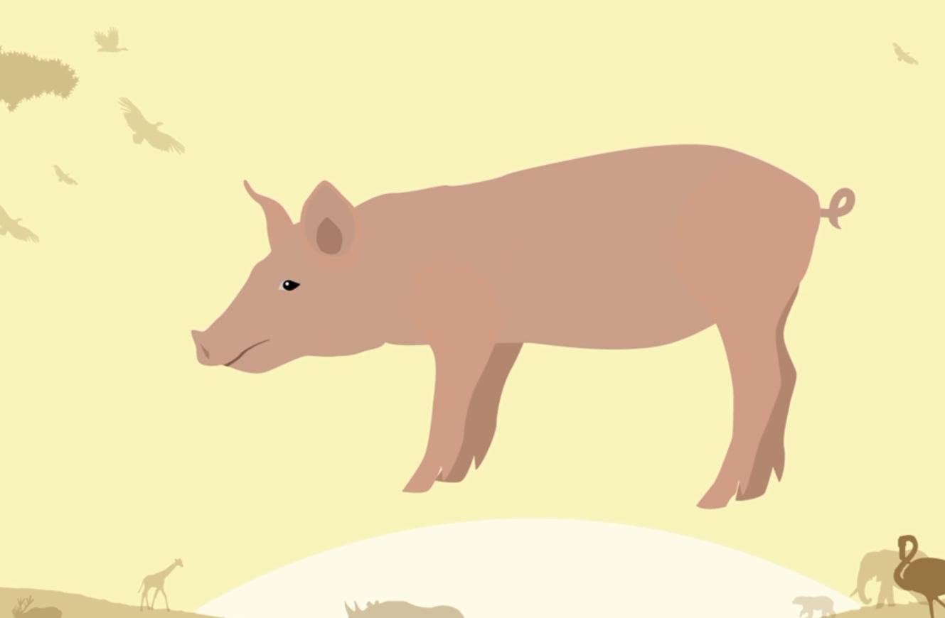 9月17日全国生猪价格内三元报价表,猪价呈现震荡走势