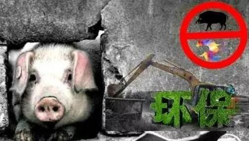 猪肉价格上涨是环保拆迁所致?部分媒体直指:全都是造谣!