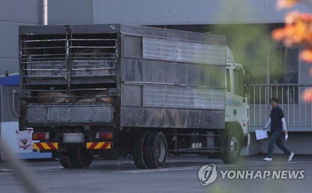 韩国解除生猪禁运令 猪肉批发交易市场将恢复正常