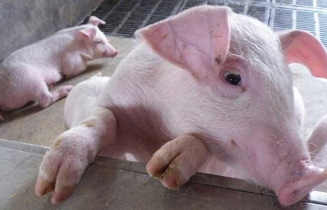 """9月19日全国生猪价格内三元报价表,受政策""""冷却""""影响,猪价上涨幅度有限"""