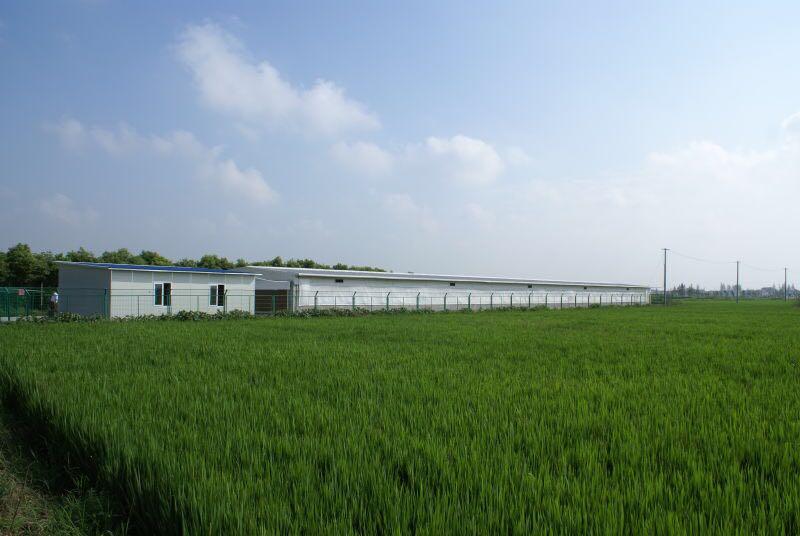 国家为什么给政策鼓励发展家庭农场? 让农民增收!