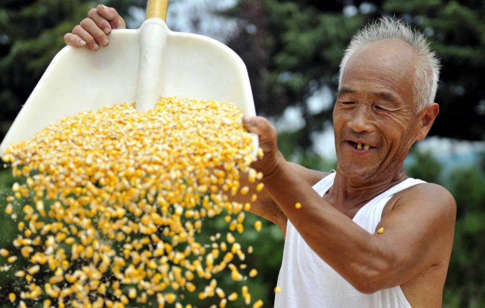 9月20日全国玉米价格行情表,疲软的玉米市场价格拿什么来拯救?
