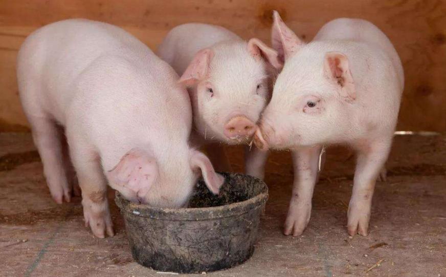 农业农村部部长韩长赋:稳定生猪生产保障市场供应!