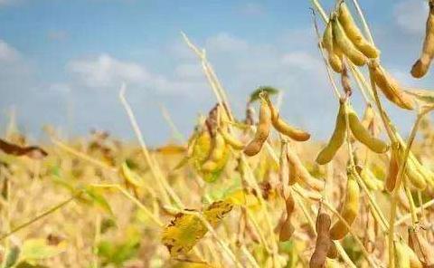 9月21日全国豆粕价格行情表,今日豆粕价格小幅下降,较上月价格涨幅收窄