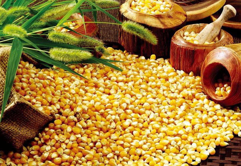 9月21日全国玉米价格行情表,贵州玉米价格逆势上涨表现抢眼