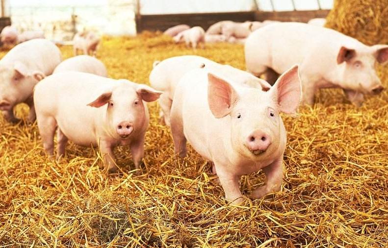 9月21日全国生猪价格内三元报价表,猪价仍以上涨为主流趋势