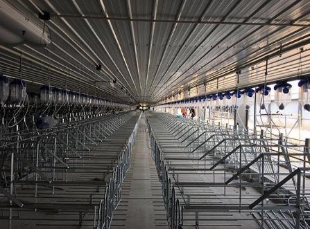 养猪企业走访:母猪存栏量目标调高五成,养殖项目昼夜施工