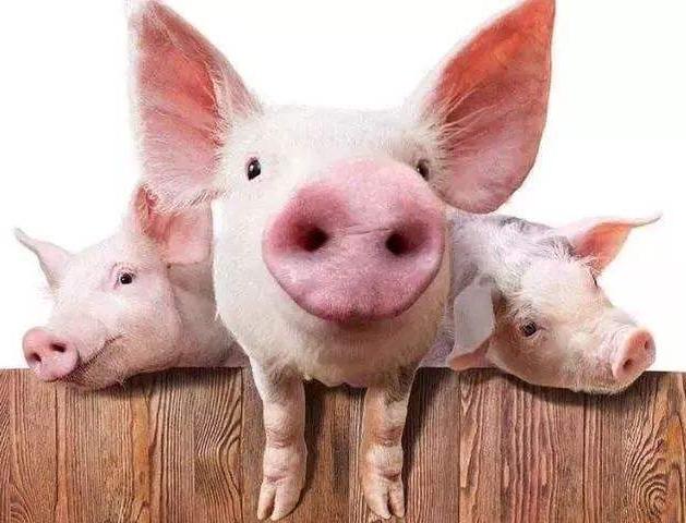 9月24日全国生猪价格外三元报价表,内蒙古猪价日涨幅1.05元/公斤